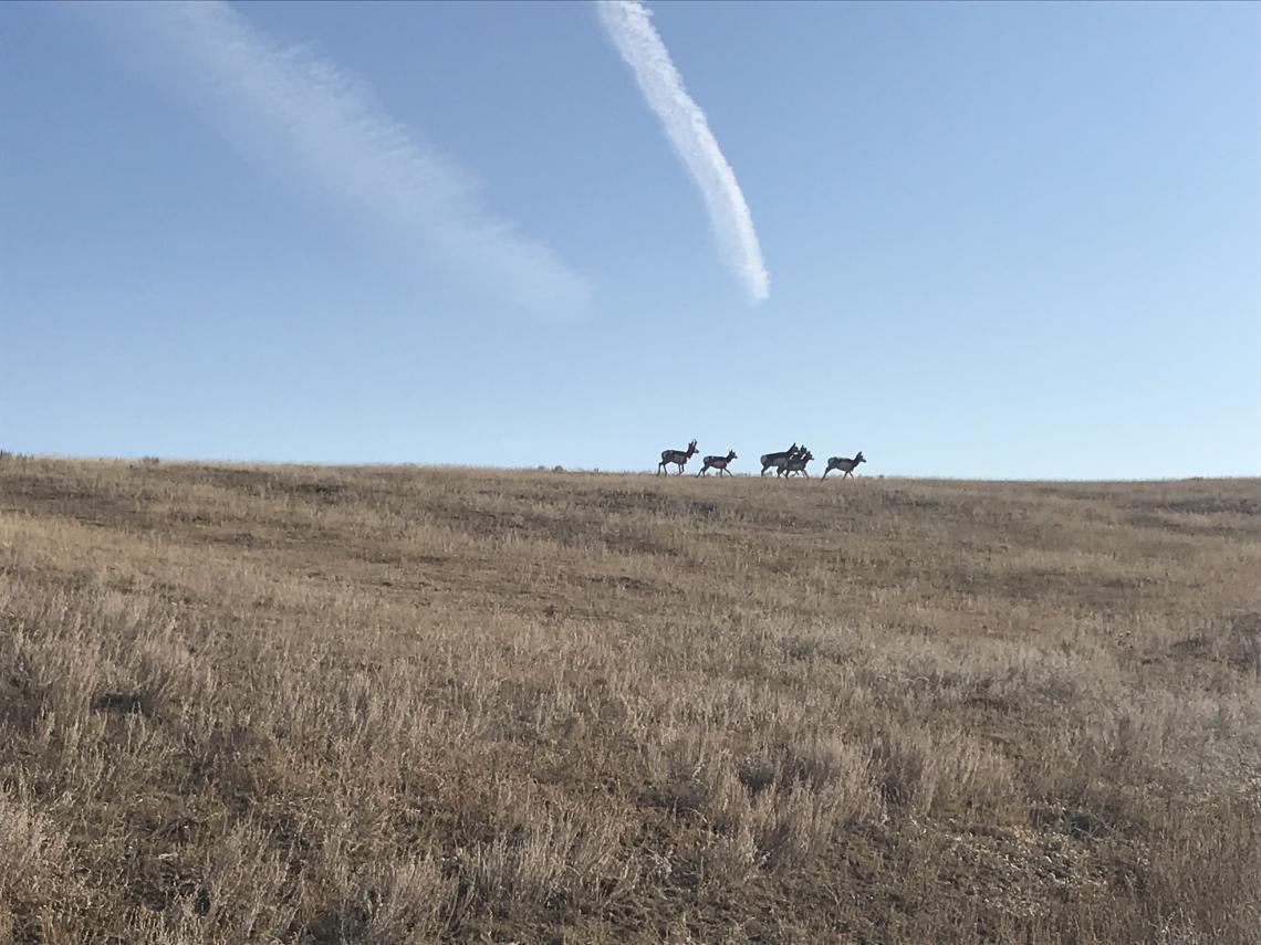 Wildlife in Alberta