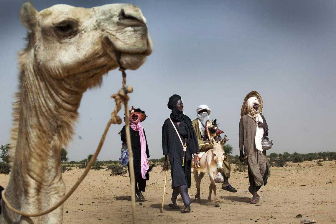 Camel donkey and herders