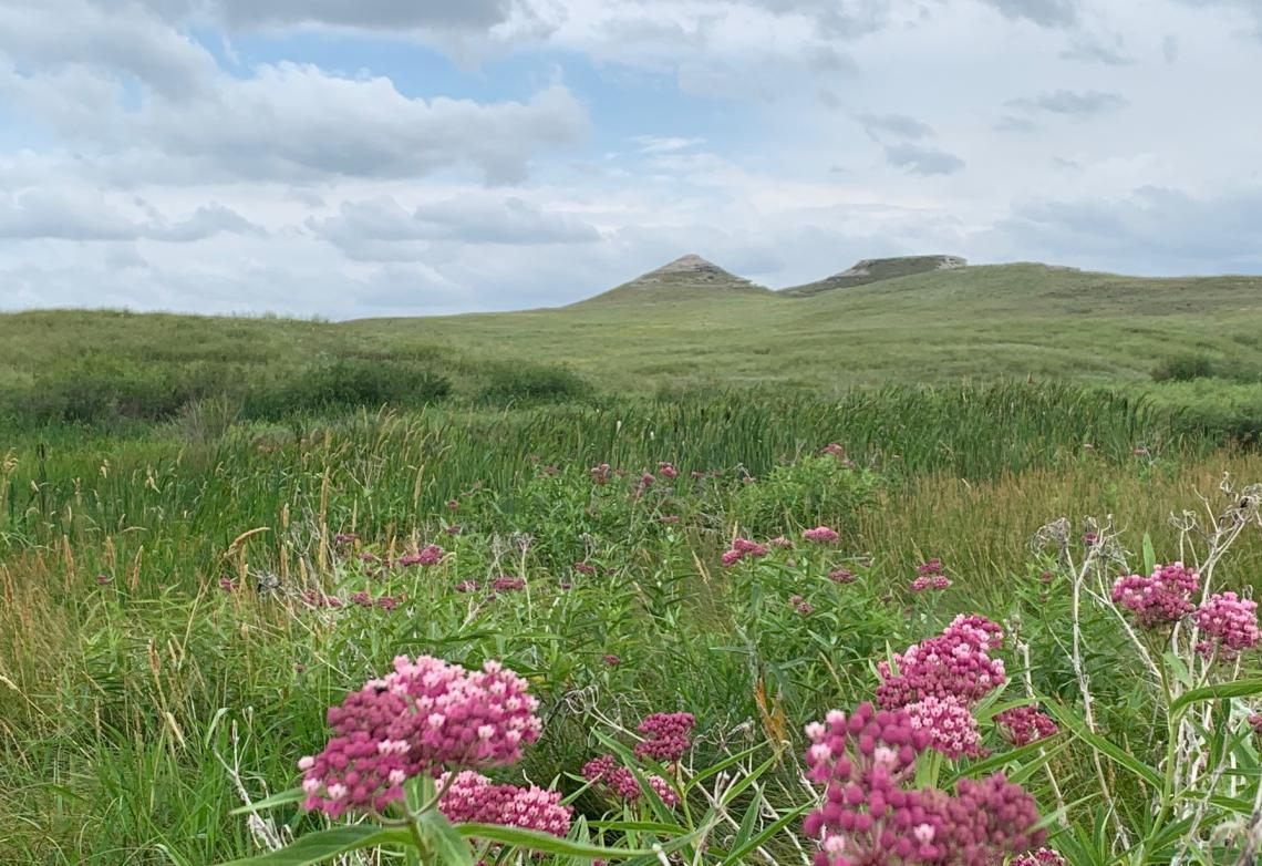 Flowering range