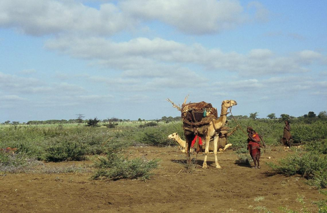 Women and camels on rangeland