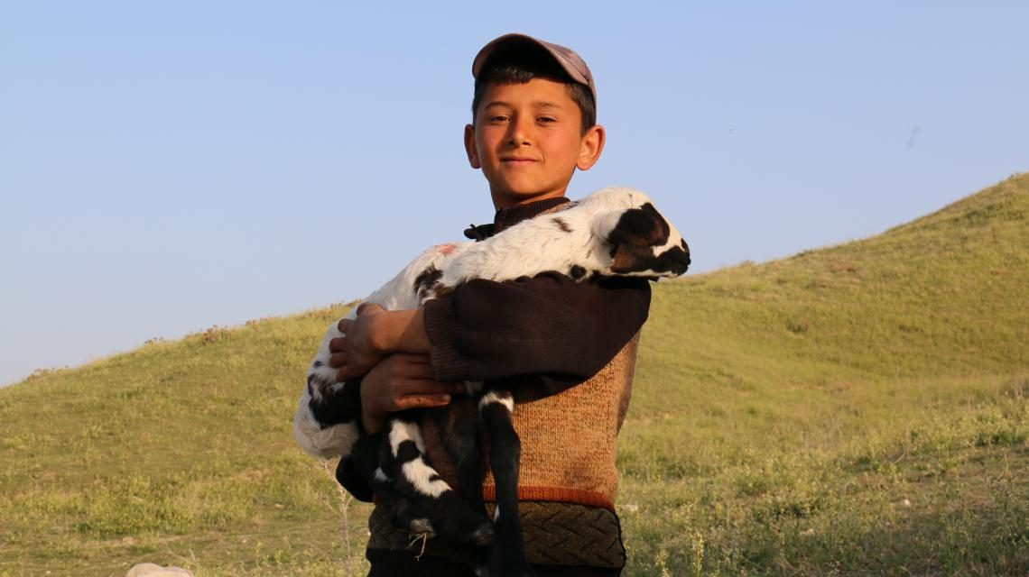Bpy herder in Turkey